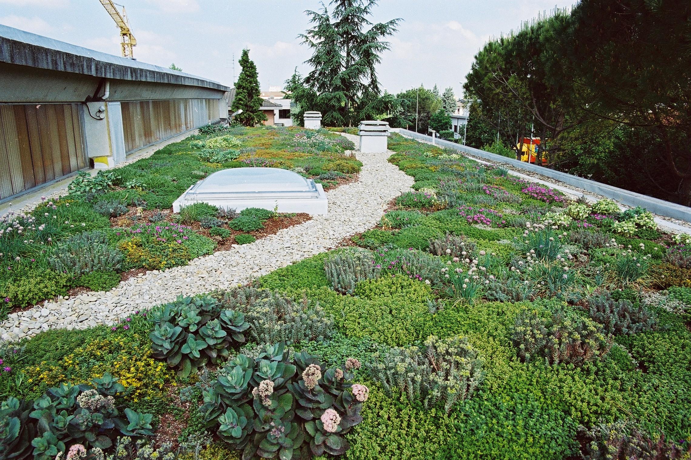 Tetti verdi 10 piante per il tuo giardino pensile casa - Piante per giardino ...